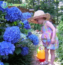 10 Blue Hydrangea Flower seeds, beautiful color, potted balcony, planting is simple, Romantic Flowers(China)