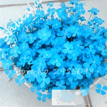 Big Promotion 100 Pcs / Bag Blue Clover Seeds Bonsai Flower Seeds Home Garden Four Leaf Lover Grass Seeds Office Desk Planta