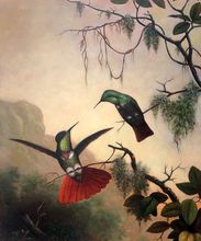 Birds Animal Painting for Office Decorative Painting Two Hooded Visorbearer Hummingbirds by Martin Johnson Heade Wall Arts