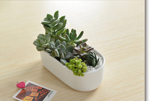 Does Not Cont!hot  Sale!Succulents Potted Flower Is A Combination of White Ceramic Oval White Porcelain Pots.ceramic Flower Pot