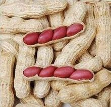 10 seeds / pack, Chinese 4 pcs Peanut Seeds in one Shell , Red Skin Organic Rare Heirloom Peanut, germination rate 95%