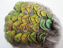 Free shipping  Wholesale 10 pcs beautiful 5-8 cm / 2-3 inches Natural golden peacock feather