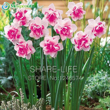 Bonsai Seeds of Double Petals Pink Daffodils Seed for Home Garden Aquatic Plants Free Shipping 100 Seeds/Pack(China)