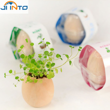 Creative DIY gifts Potted Planting Crop Grow Bonsai magical Mini Lucky Egg Plant flowers pot 3 style(China)