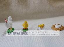 pvc figure Genuine simulation model toy chick life cycle set(China)