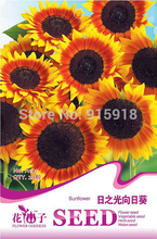 Buy 2 Get 1!(Can accumulate ) 1 Pack 20 Seed Japan Sunflower Helianthus Annuus Flower HOT A141