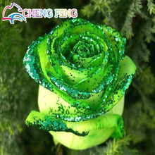 Loss Promotion! 50pcs Rare Golden Green Rose Seed Strong Fragrant Garden Rose Flowers Natural Growth Home Garden Free Shipping