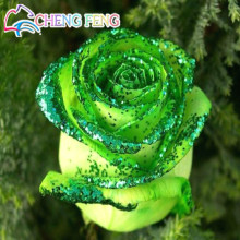 Loss Promotion! 50pcs Rare Golden Green Rose Seed Strong Fragrant Garden Rose Flowers Natural Growth Home Garden Free Shipping(China)
