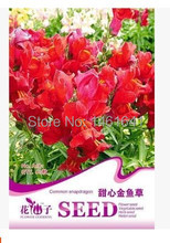 Sweetheart snapdragon flower seeds potted flowering plants Rare plant seeds About 60 PCS/package