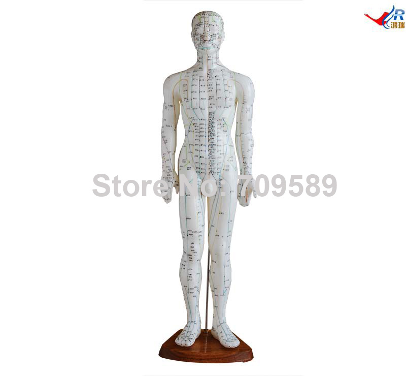 Acupuncture Model 60CM<br>