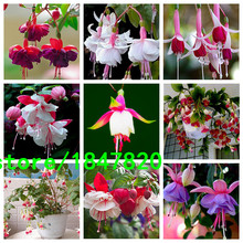 Mixed Fuchsia 9 Kinds Perennial Flower Seeds Can be Choose Potted Flowers DIY Planting Flowers Bell Flower Seeds 100 PCS