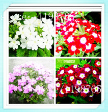 2016 New 100pcs Verbena Seeds Sementes Limited Outdoor Plants Very Easy Happy Farm Summer Bonsai Flower For Home Garden Plant