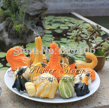 Free shipping 10 Seed  Of Odd Shape Be Riotous With Colour Doll Pumpkin Seeds original pack B012