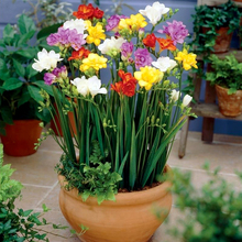Marseed 100 pcs Freesias Plant Pot Rare Flower BonsaiDIY Decoration For Home Garden Rainbow Fragrant Flower Bonsia Plant MAS004(China)