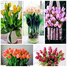 Multifarious Tulip Flowers, Tulip Seeds Of Perennial Garden Flowers (Not Tulip Bulbs) Herbs For Seedlings Seeds 100Pcs Promotion