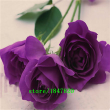 GGG Free Shipping 20 Swept Away Rose Seeds --Fire & Ice Rose ,Beautiful DIY Home Garden Flower(China)