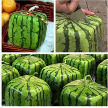 30seeds/bag geometric square watermelon seeds Rare fruit potted plants juicy fruit China watermelon bonsai seeds(China)