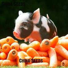 200 Seeds Five Inches Carrot Seed Good Taste Man And Pet Food Yard Potted Fruit Vegetable Seeds For Home Garden Planting Semente