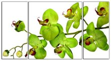 BANMU No Frame 3 panel wall art Orchid Flower print on canvas Painting Wall loral canvas prints flower canvas designs Painting(China)