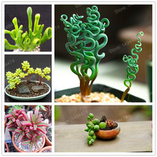 Mixed color succulent plant seeds meaty plant Flower seeds home decoration bonsai plant seeds 200pcs for home garden(China)