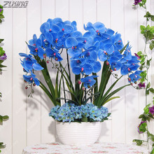 ZLKING 100 PCS China Real Unique Beautiful Blue Phalaenopsis Seeds Bonsai Plant Natural Aroma Cymbidium Perennial Exotic Flower