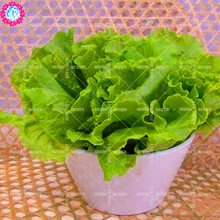 11.11 Big Promotion!200 pcs/lot lettuce seeds green vegetable seed condiment in garden&home aweet fresh annual herb plant seeds(China)