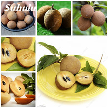 Promotion ! 20 Pcs Sapodilla Seeds Bonsai Plants Tree Seed Japanese Garden Plants Healthy Fruit Shape Like a Mango. Kiwifruit(China)