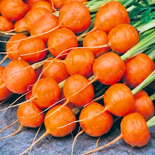 200pcs/bag Parisian Carrot Seeds Non-GMO Vegetable Seeds Kitchen assisted food outdoor plant pot for home garden(China)
