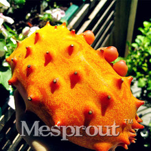 Hot selling kiwano melon seeds,Cucumis Metuliferus, african cucumber, vegetable seeds DIY home garden free shippin 100PCS(China)