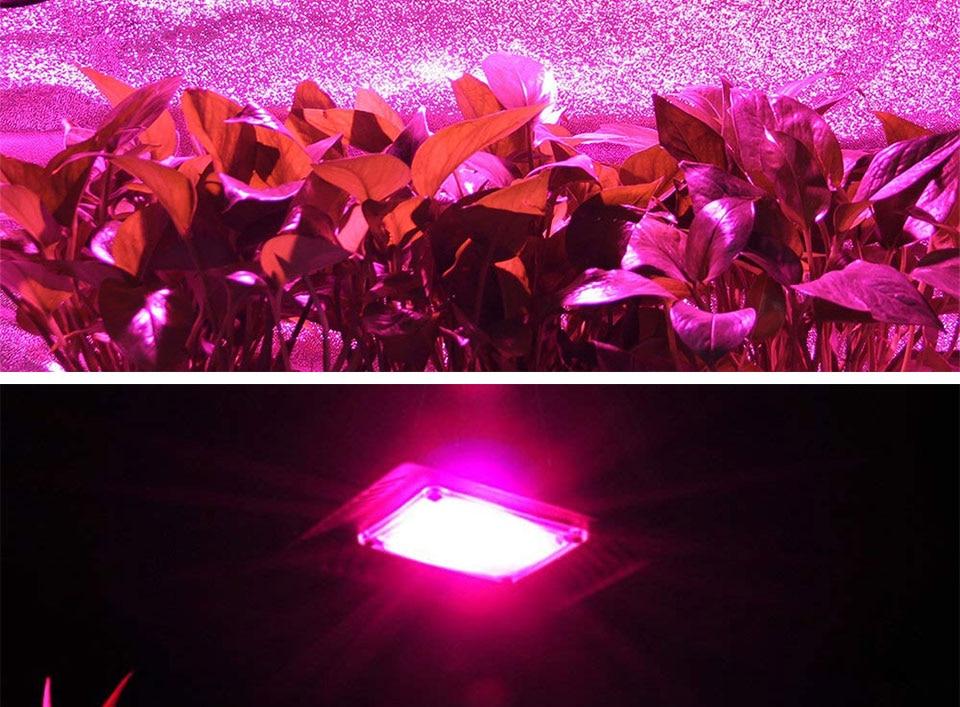 AC 110V 220V LED COB Lamp Chip 20W 30W 50W 100W 150W Full Spectrum LED Plant Grow Light Driverless Smart IC DIY LED Floodlights (21)