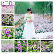 50pcs Violet Seeds Garden Potted Plants Violet Flowers Perennial Herb(China)