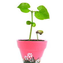 Creative mini micro landscape plants love with lettering magic bean seeds office small flower pot 10pcs / lot(China)