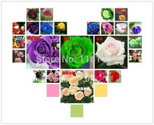 240Seeds 24 colors rare rainbow rose flower seeds Multi-color Plants Home Garden bonsai colorful rose flower seed Mixed Packing