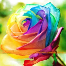 New Arrival Rainbow Rose Flower, 200 Seeds/Pack, Fresh Rose Seeds Perennial Potted Rose Plant