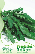 Eruca Sativa Salad Rocket Arugula Organic Vegetable Seeds, Original Pack, 120 Seeds / Pack, Rucola Colewort E3297