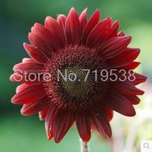 Helianthus Red Sunflower Seed, Red Sun Fortune Bloom, Flower Seeds 20 seeds/pack