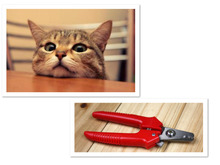 Pet Clipper Cat Dog Claw Nailclippers Pet Nail Clippers Trimmer Animal Cutter Nail Clippers Stainless Steel