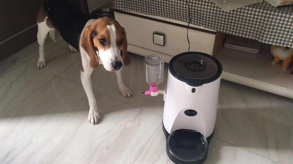 dog camera (10)