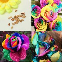 Flower seeds Bonsai Colorful Rainbow Rose seeds Valentine Lover Flower Seeds Garden decoration Plant free shipping 20pcs B51