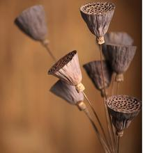 10pcs 55cm mini dry lotus dry flower bouquets dried  simulation flowers flowers sitting room home decoration