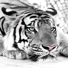 3D photo wallpaper Tiger black and white animal murals entrance bedroom living room sofa TV background wall mural wall paper