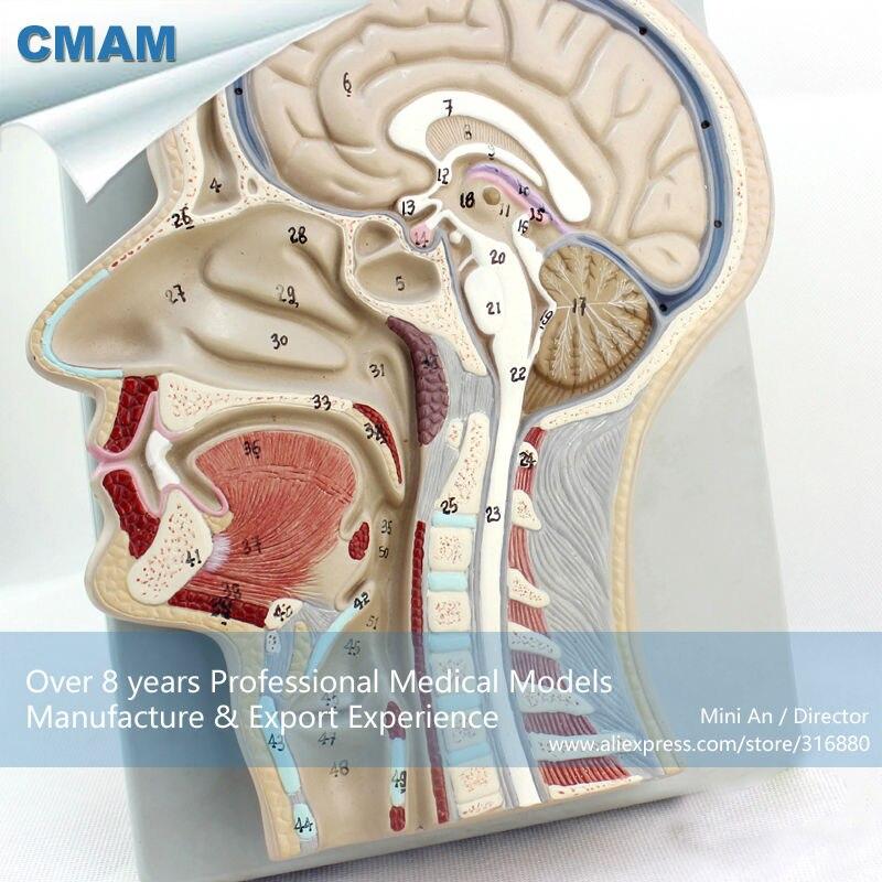CMAM-BRAIN02 Advanced Brain Section Model, 53 Positions Displayed Brain Model<br><br>Aliexpress