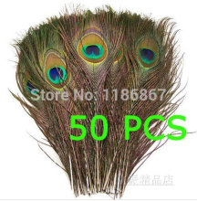 Free Shipping 50pcs/lot  Beautiful Natural Peacock Tail Feathers 25-30cm/10-12inch For DIY house Decoration