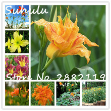 Hemerocallis Beautiful Flowers Seeds 60seeds/bag Rare Hybrid Daylily Flowers Seeds For Home Garden Planting