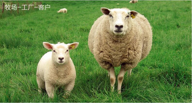 Real Sheepskin Rug 2P