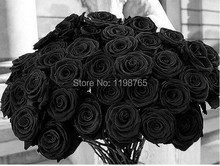 100pcs 100% Original Black Rose Seeds China Rare seeds of Rose Flowers Free Shipping 49%