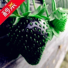 100x Rare Black Strawberry Seed Nutritious Delicious Fruits Vegetables Plant Organic Heirloom Fresh Seed(China)