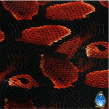 [Width 0.5M]FREE SHIPPING Red Snake Water Transfer Printing Film HA182-S, Hydrographic film,Pva Water Soluble Film Hidrografik