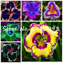 Home & Garden Bonsai Daylily Flower Seeds Variety Of Colors, The Germination Rate 95%,200 Pcs Berserk Special Promotion