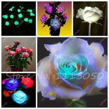 Magical Luminous Roses Seed Night View Of The Most Beautiful Bonsai Flower Desk Mini Flower Potted Plant 150 Pcs / Packages(China)